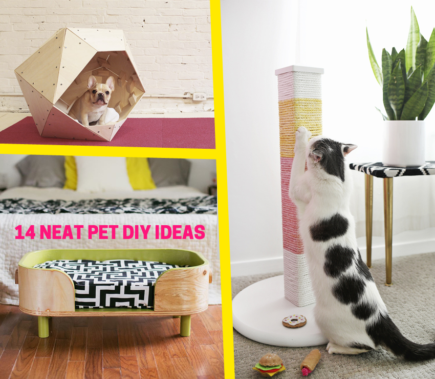 14 Neat Pet DIY Ideas