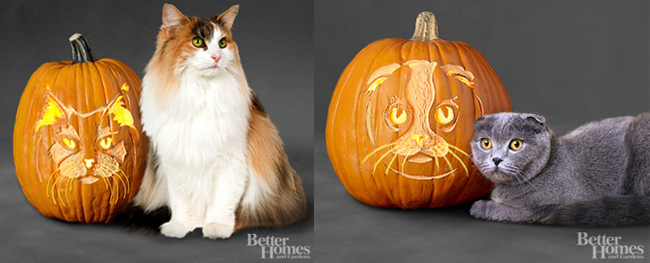 http://www.bhg.com/halloween/pumpkin-carving/pumpkin-stencils-of-favorite-cat-breeds/#page=1