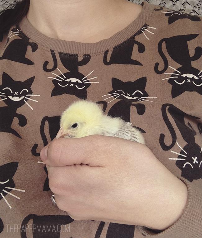 Chickens // thepapermama.com