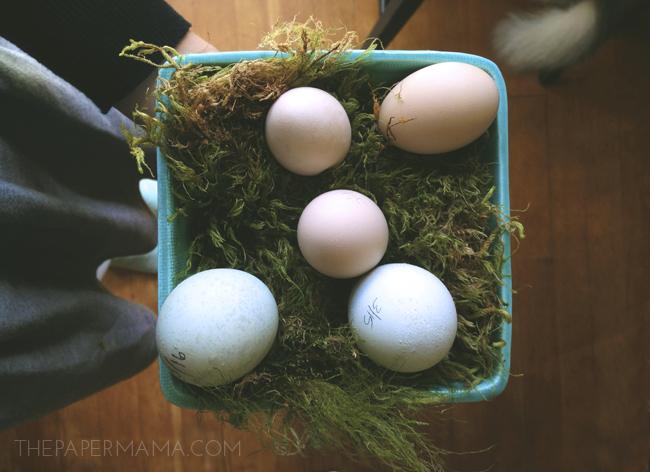 Chicken Eggs // thepapermama.com