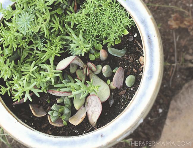 Succulent - Magazine cover