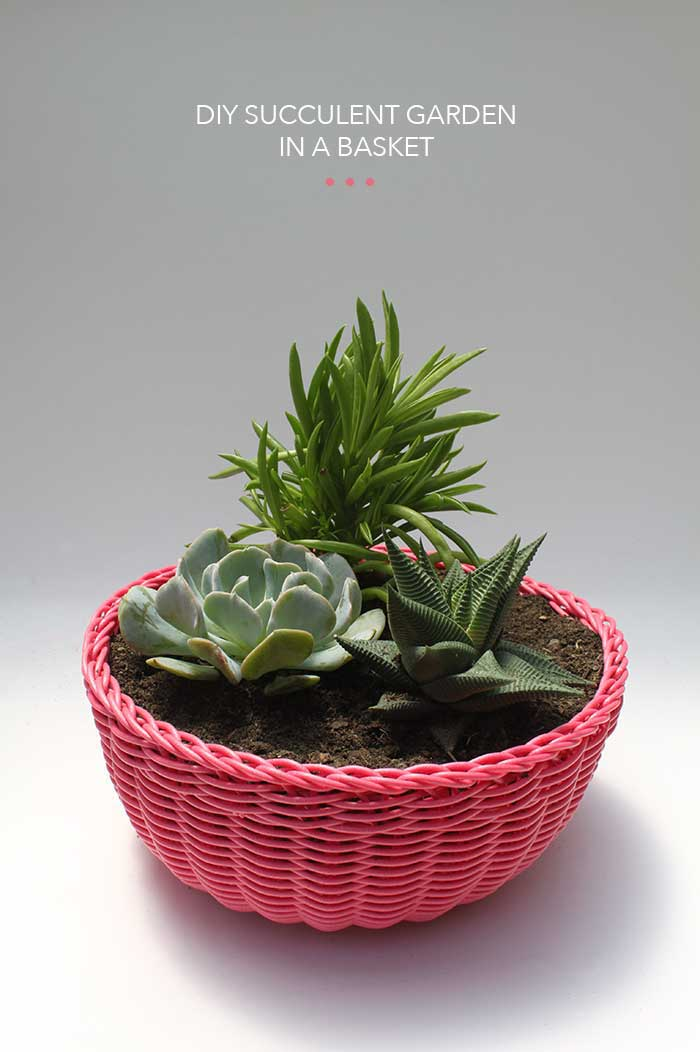 http://thehomesteady.typepad.com/my-blog/2013/07/diy-succulent-garden-in-a-basket.html