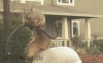 Squirrel // thepapermama.com