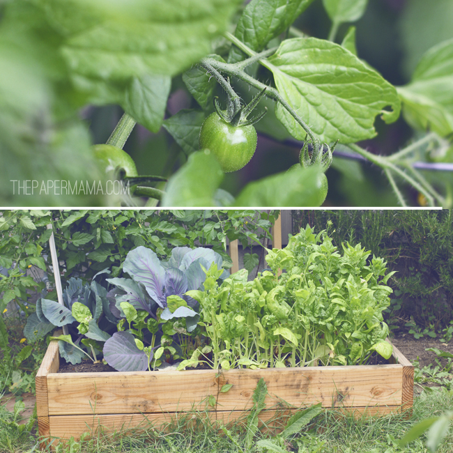 How to build a garden box // thepapermama.com