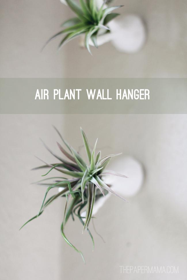DIY Air Plant Wall Hanger // thepapermama.com