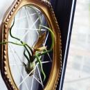 http://allthegoodgirlsgotoheaven.blogspot.com/2012/03/diy-air-plant-display.html