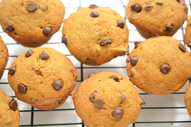 These chocolate chip pumpkin muffins need to be in my LIFE, from One Little Project.