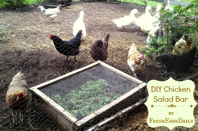 http://www.fresh-eggs-daily.com/2012/05/diy-chicken-salad-bar-giveaway-from-my.html