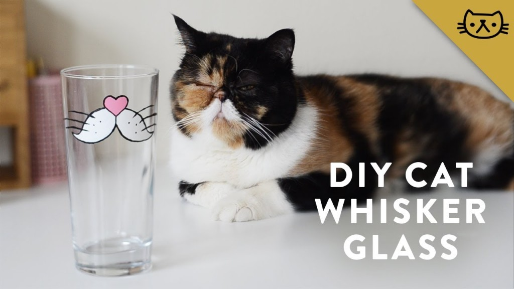 You'll look like you have cat whiskers when you drink from the cute cat whiskers glass diy, from Pudge the Cat.