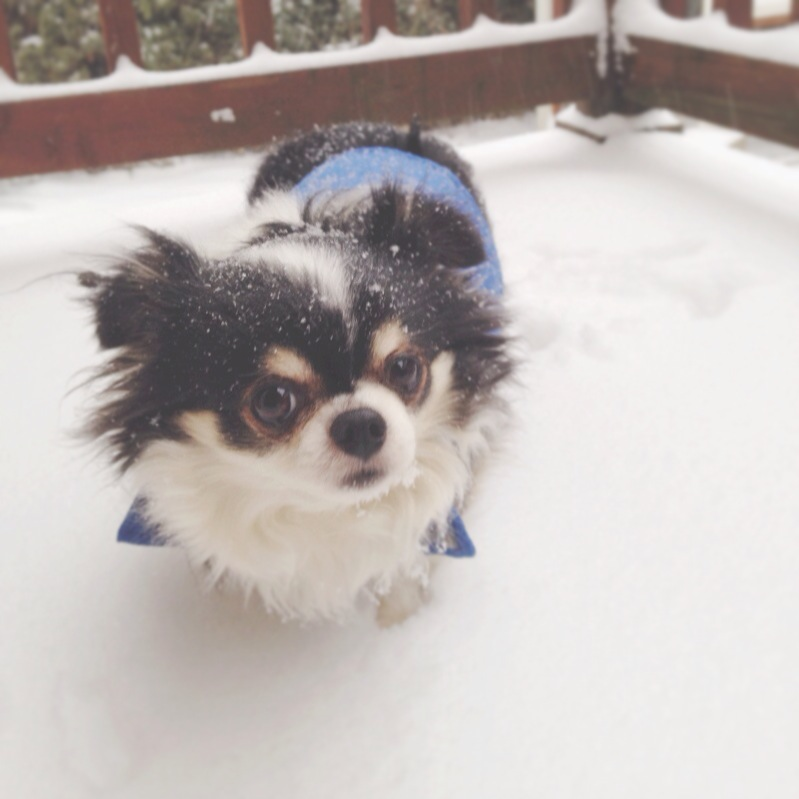 Angus in the snow // thepapermama.com