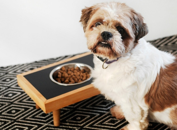 Would you like a more modern dog dish for your pup? This DIY raised pet feeder is perfect. Check it out on Curbly.